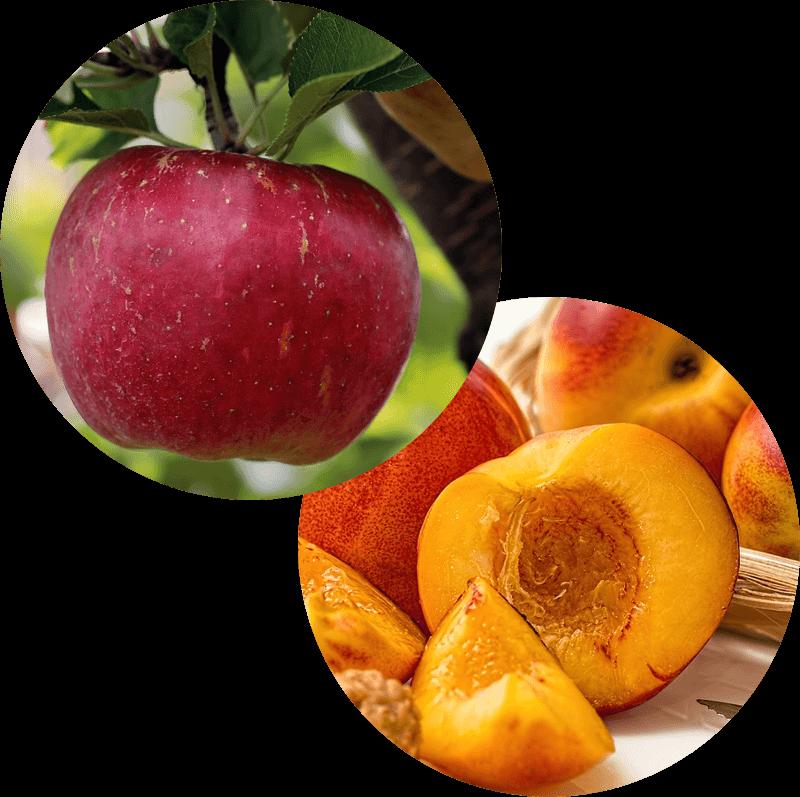 Paczek z jabłkiem i brzoskwinią