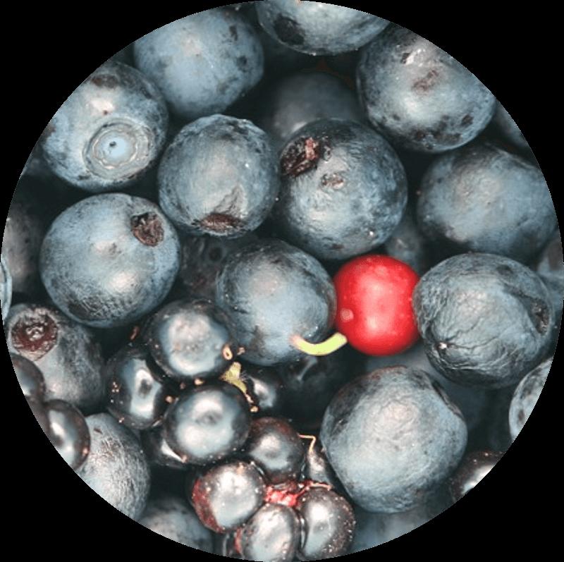 Pączek z owocami leśnymi